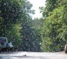 Опасен ли тополиный пух для автомобиля?