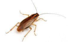 Проблема с тараканами — проведение дезинсекции